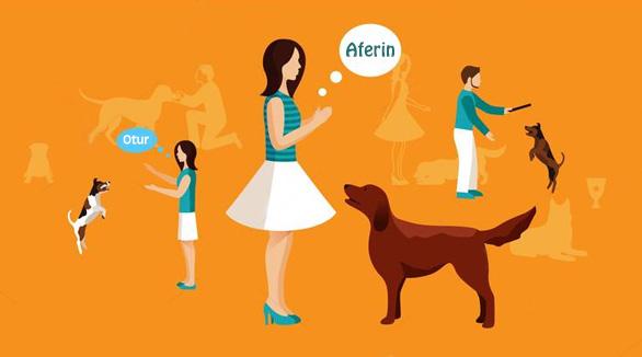 Köpekler Hakkında Bilgi ve Tavsiyeler